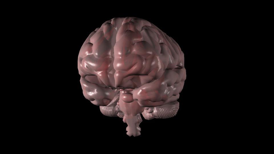 Animated human brain - photo#17