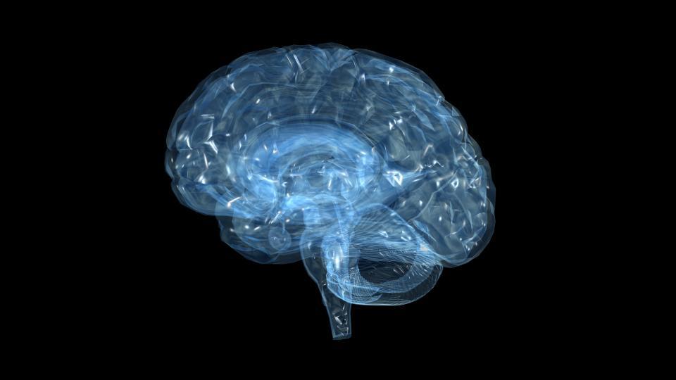Animated human brain - photo#26