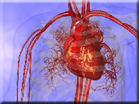 Medical animation of heart with pulmonary arteries