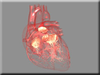 Medical animation of heart anatomy